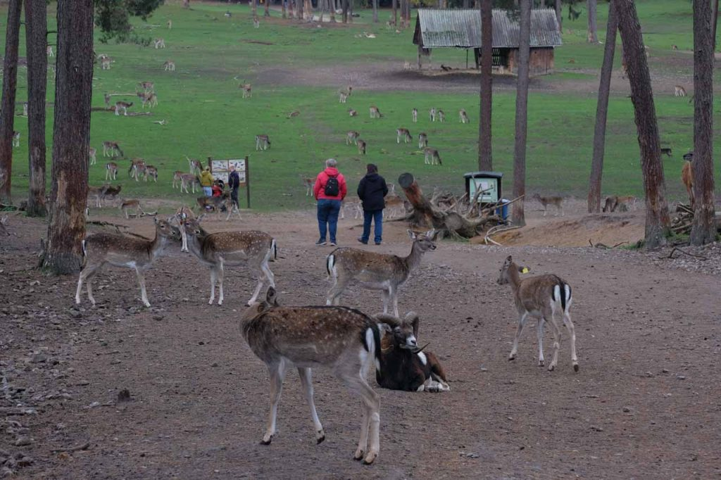 Natuurwildpark Granat