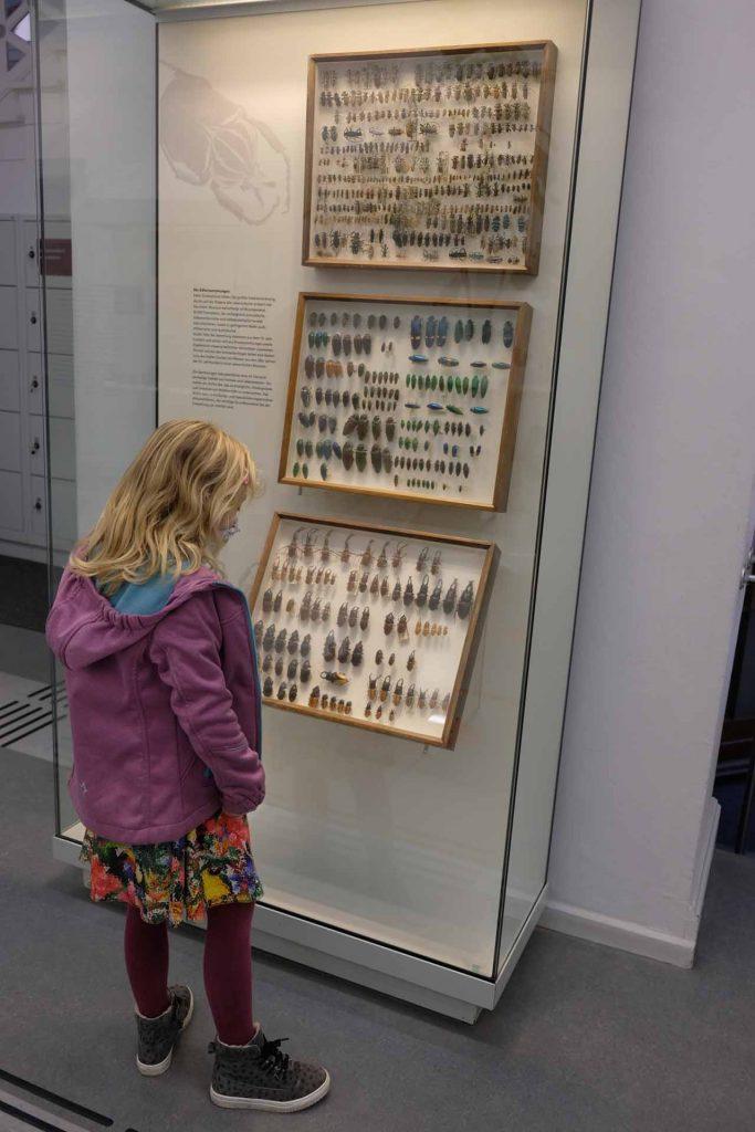 Natuurhistorisch museum Kiel