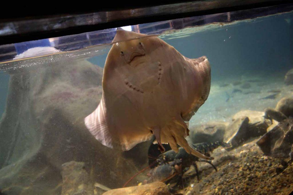 Havets hus Aquarium