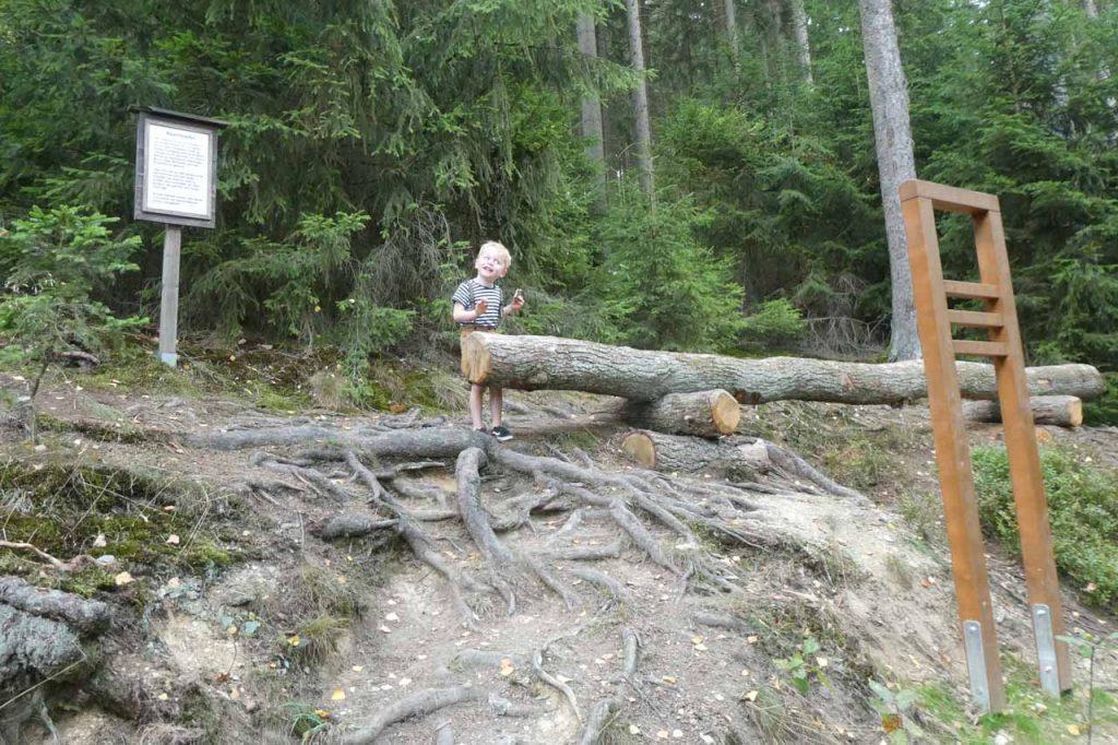 Holzerlebnisparcours,