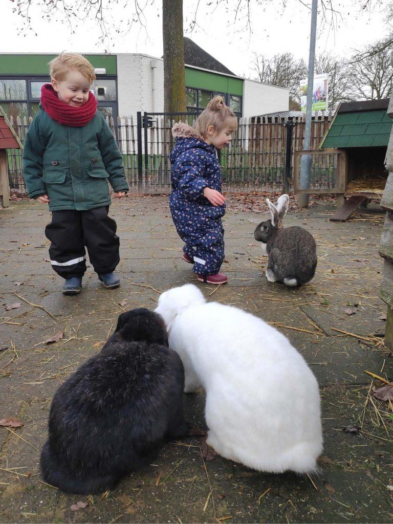 dierenbos vakantiepark