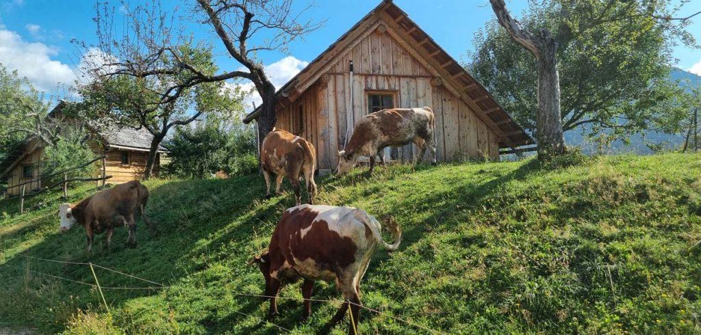 Organic Farm Šlibar in Tržič
